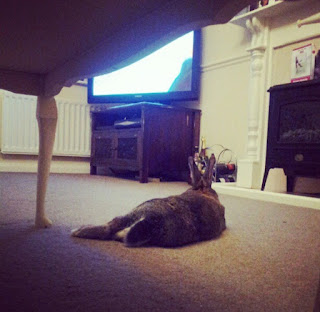 house rabbit, pet loss, grieving for loss of pet, bunny, lifestyle blog, lbloggers, love, rabbit watching TV