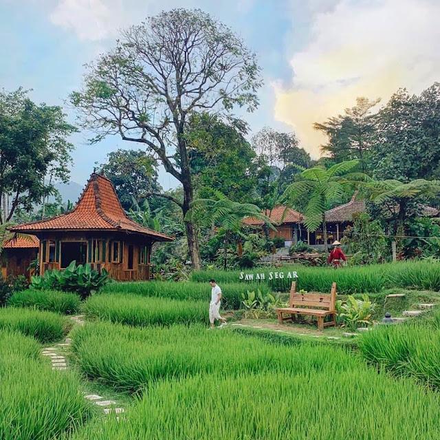 Sawah Segar Sentul Bogor Jawa Barat