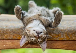 6 datos interesantes sobre los hábitos de dormir de tu gato