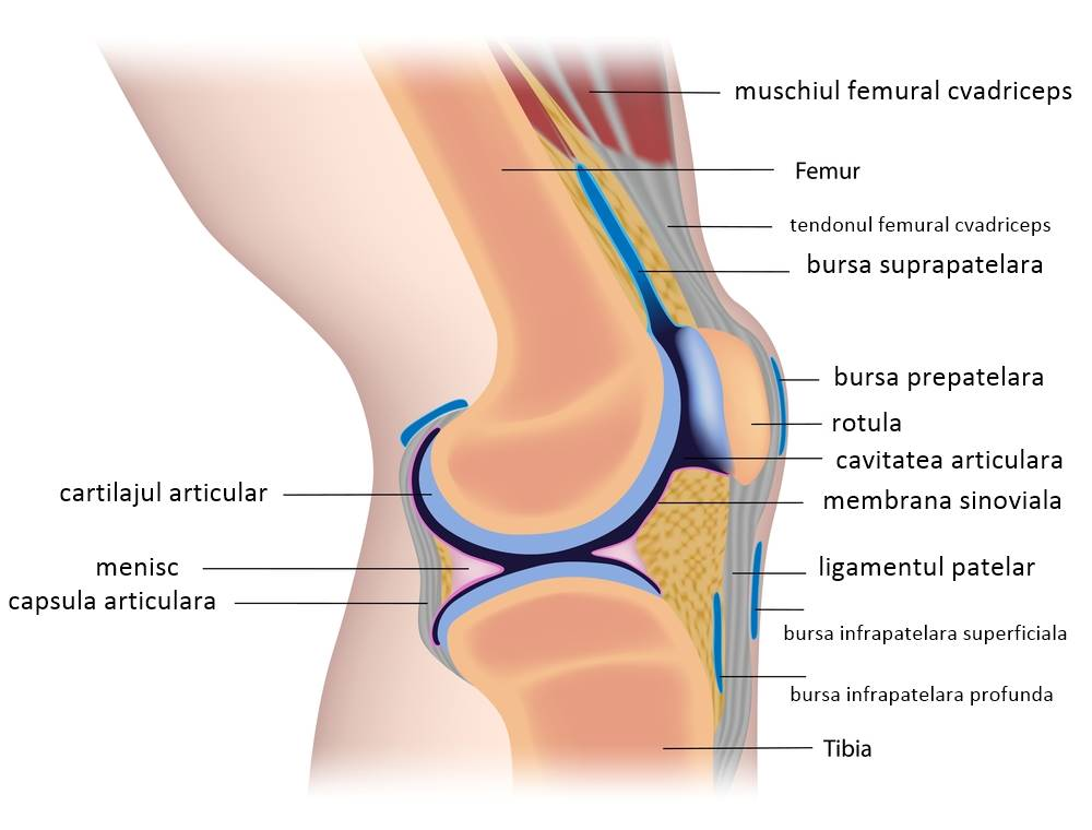 Poliartrita Reumatoida: Simptome • Poze • Analize • Tratament - bekkolektiv.com