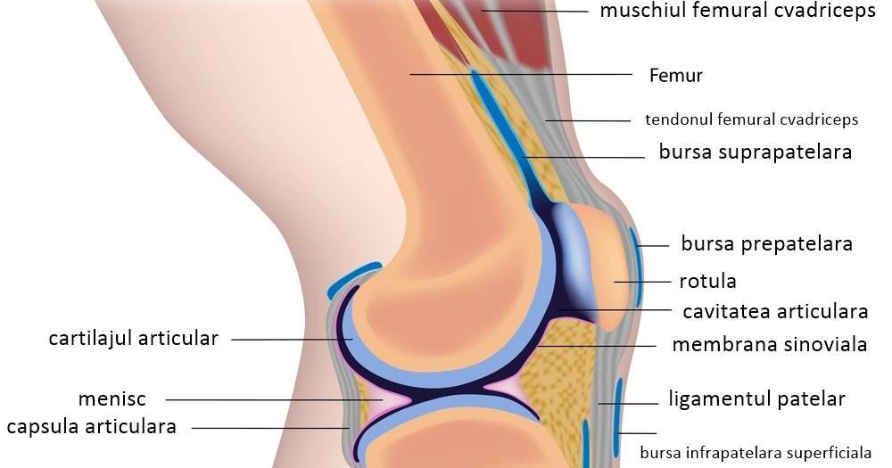 Afectiunile genunchiului tipuri, metode tratament | bekkolektiv.com