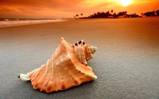 Ένα κοχύλι σε μεγάλη παραλία στη διάρκεια του ηλιοβασιλέματος.