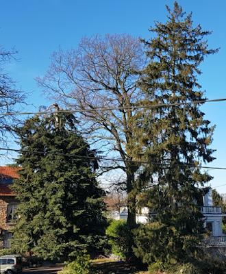 Conseil-jardin-hiver-Paris-a-louest