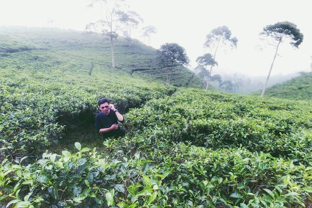 Pemandangan alam objek wisata kebun teh Kemuning