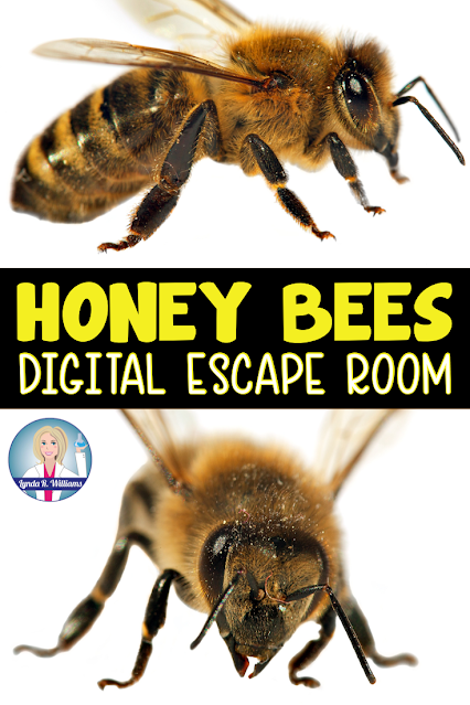 Distance Learning Escape Room on the Honey Bee