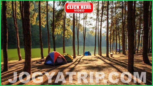 Jogja trip travel, Hutan Pinus Mangunan Jogyakarta, lokasi Pinus Mangunan Jogja, Jogja tour driver, Jogja tripadvisor