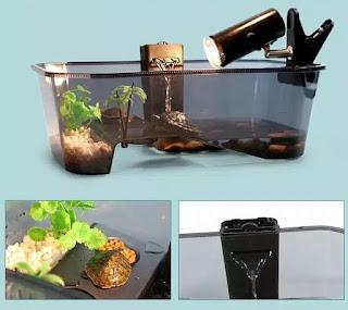 aquarium-kura-kura.jpg
