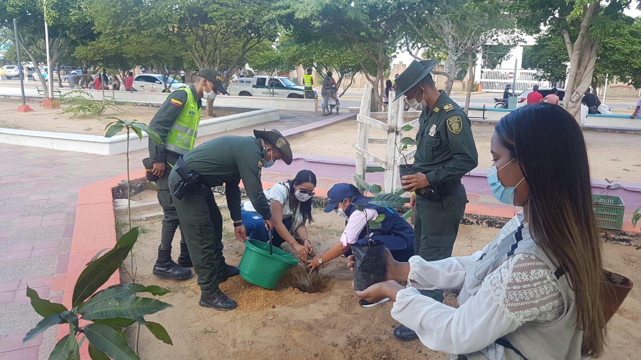 hoyennoticia.com, Policía sembró plántulas en el parque de La India