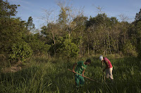 In this Oct. 10, 2012 photo, Patrick da Silva, left, and Talles de Almeida work on a reforestation project in the Atlantic Forest region of Silva Jardim, in Brazil's state of Rio de Janeiro. (Credit: AP Photo/Felipe Dana) Click to Enlarge.