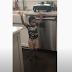 Niño de 2 años adora a Dios cantando alabanza con sus manos levantas. (Vídeo)