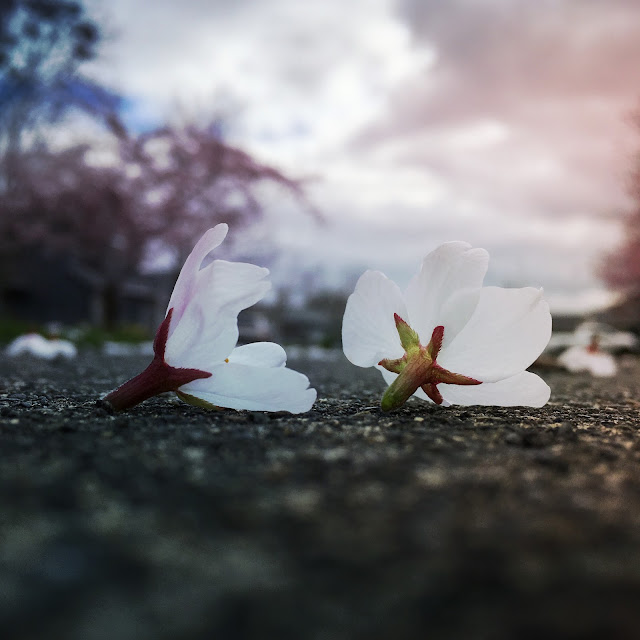 Fallen Blooms Photo by Jill Foley