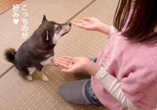 exercícios com seu cão