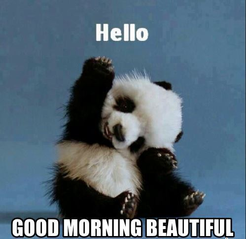 cute panda saying good morning