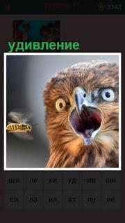от удивления сова раскрыла свой клюв широко и глаза вытаращила