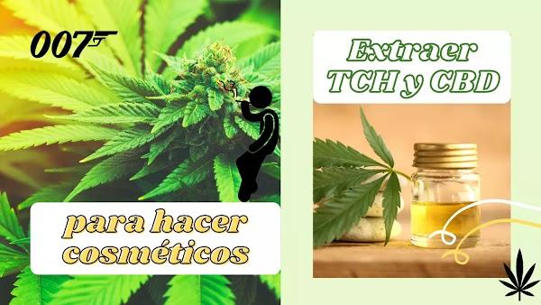 Extraer CBD y THC de la Marihuana para hacer cosméticos