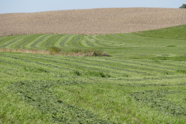 Alfalfa fall potassium fertilizer winter hardiness Minnesota