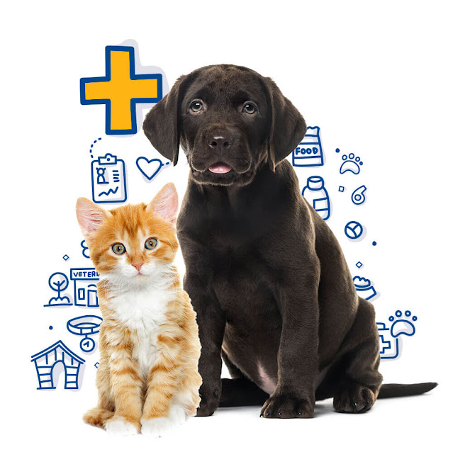 Pet Health is important for each Animal and each Size