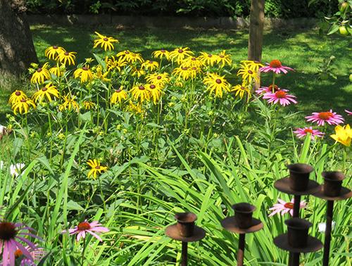 Neuer Gartentraum Sonnenhut Sonnenbraut Und Andere Sonnenanbeter