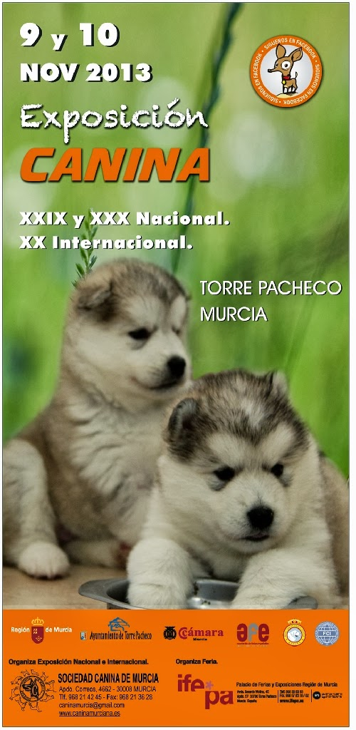 Foto Especial Nordicos Exposicion Canina Nacional e Internaciona en Murcia
