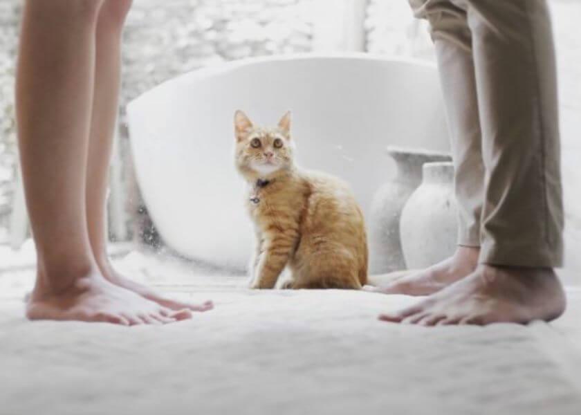 Lelaki pencinta kucing