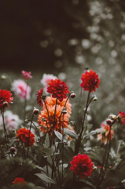 اجمل صور خلفيات الجوال صور ورد جميله 11