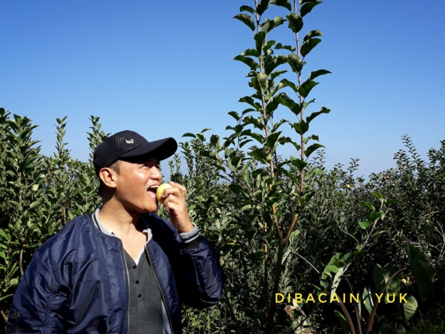 Menikmati Apel Segar dari Wisata Petik Apel KTMA Malang