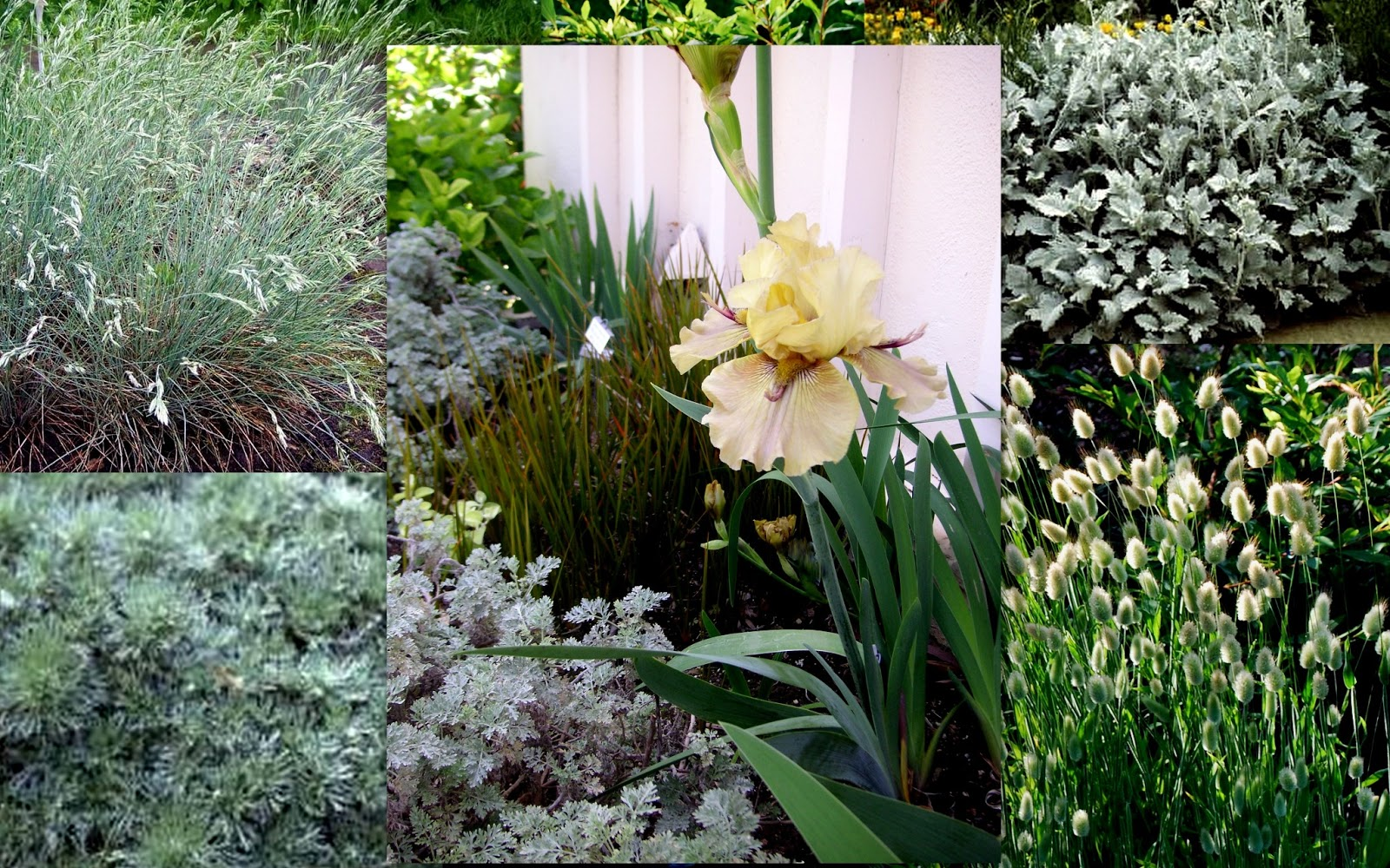 World of Irises Companion Planting with Irises Thornbird – What Should I Plant in My Garden