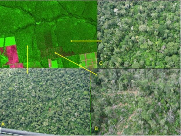 Degradação florestal Amazônia Legal - INPE, desmatamento floresta amazônica, desmatamento, amazônia, floresta amazônica, floresta, perda de cobertura vegetal