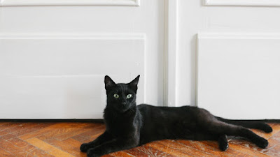 How Did Black Cats Become a Halloween Icon?