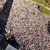 Tradicional romaria que atrai milhares de devotos a Bom Jesus da Lapa é cancelada