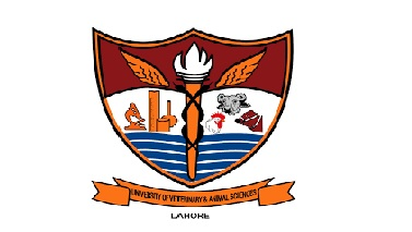 Admission Open UVAS University Lahore 2021- University of Veterinary & Animal Sciences - UVAS Lahore Punjab Undergraduate Program