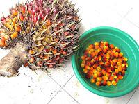 palm kernel oil
