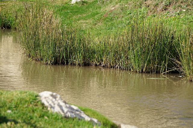 מים בנחל ציפורי במלוא הדרו