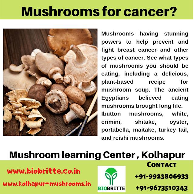 Mushroom for Cancer? - Mushroom Learning Center