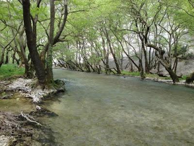 Στην απομάκρυνση ξερών πλατάνων κατά μήκος του ποταμού Λούρου θα προχωρήσουν οι υπηρεσίες της Περιφέρειας Ηπείρου