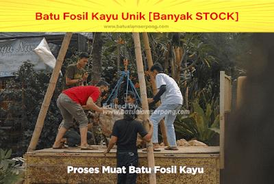 proses muat batu fosil kayu termahal