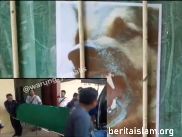 Wanita di Jakarta Tewas Digigit Anjing