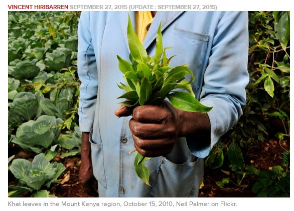 Medeshi News : France - Is khat the new green gold?