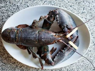 Switzerland rules lobsters must be stunned before boiling