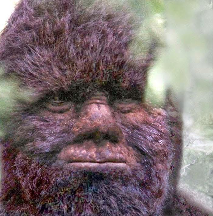 bigfoot-facial-expression-video