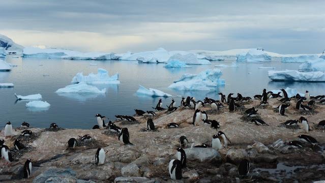 Descubierto cementerio de Pingüinos