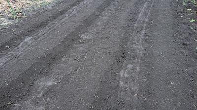畝を作った状態(細かい雑草が土に混入しています)