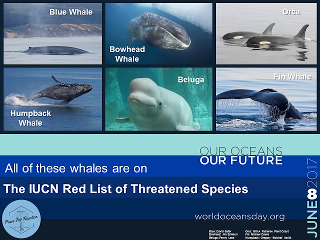 World Oceans Day June 8 Endangered whales