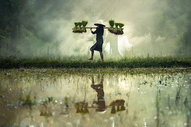 Mystical agriculture and Crops yields 2021