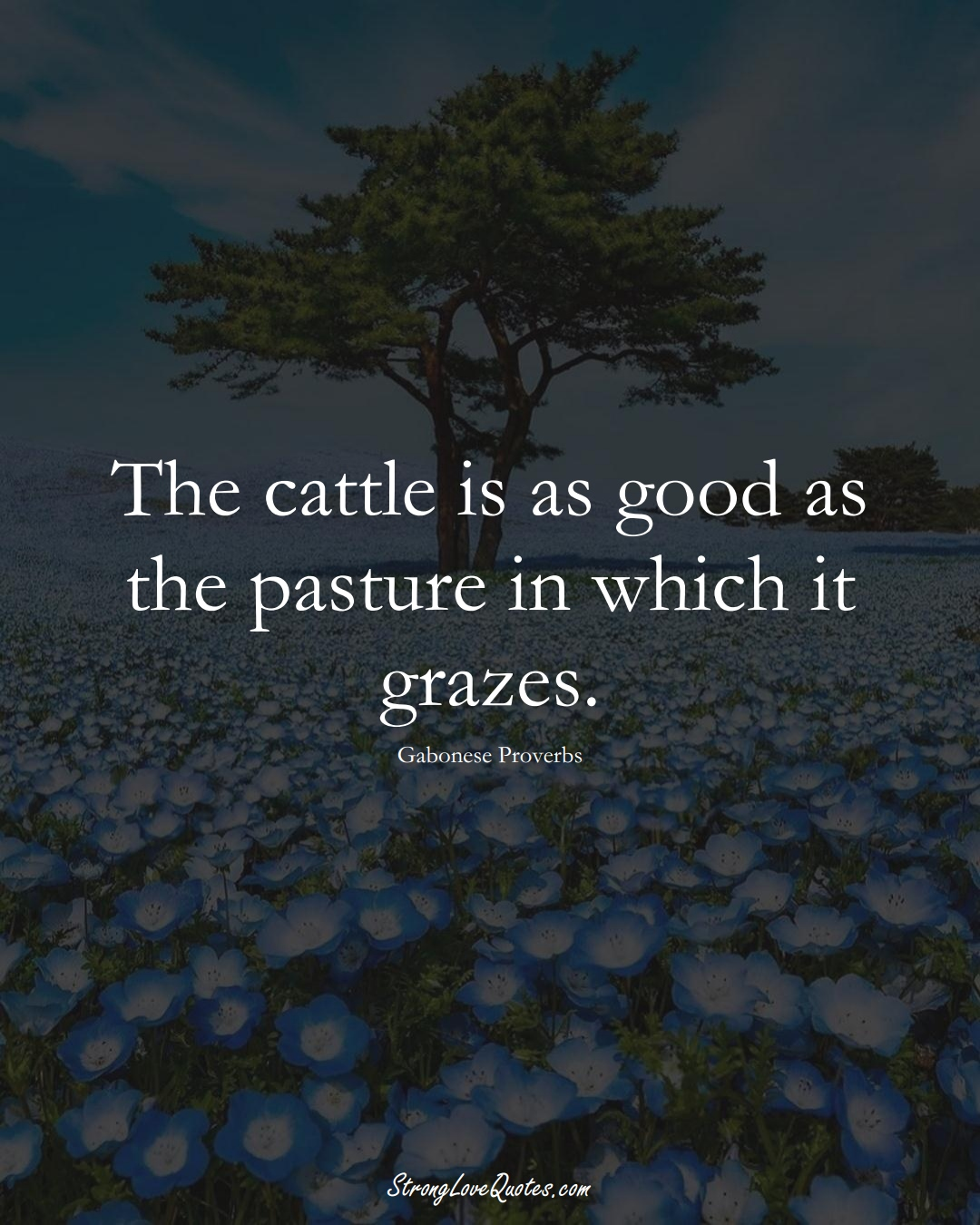 The cattle is as good as the pasture in which it grazes. (Gabonese Sayings);  #AfricanSayings