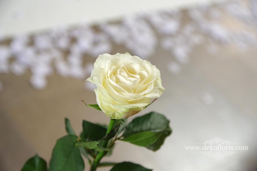 białe róże na ławkach
