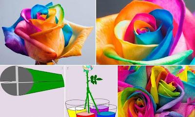 bunga ros berwarna relaks minda