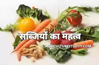 हमारे जीवन में हरी सब्जियों का क्या महत्व है? (Importance of vegetables in hindi)