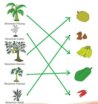 gambar pasangan tanaman dan buahnya www.jokowidodo-marufamin.com