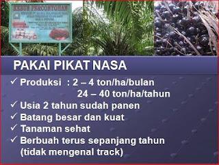 AGEN NASA DI Tanah Putih Tanjung Melawan Rokan Hilir - TELF 082334020868